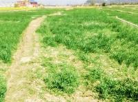 Land at Dhadikot