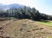 Land at Kitini