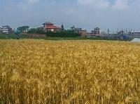 Land at Lamatar