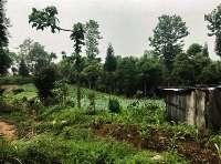 Land / House at Ilam